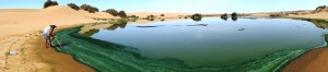 Lac de spiruline